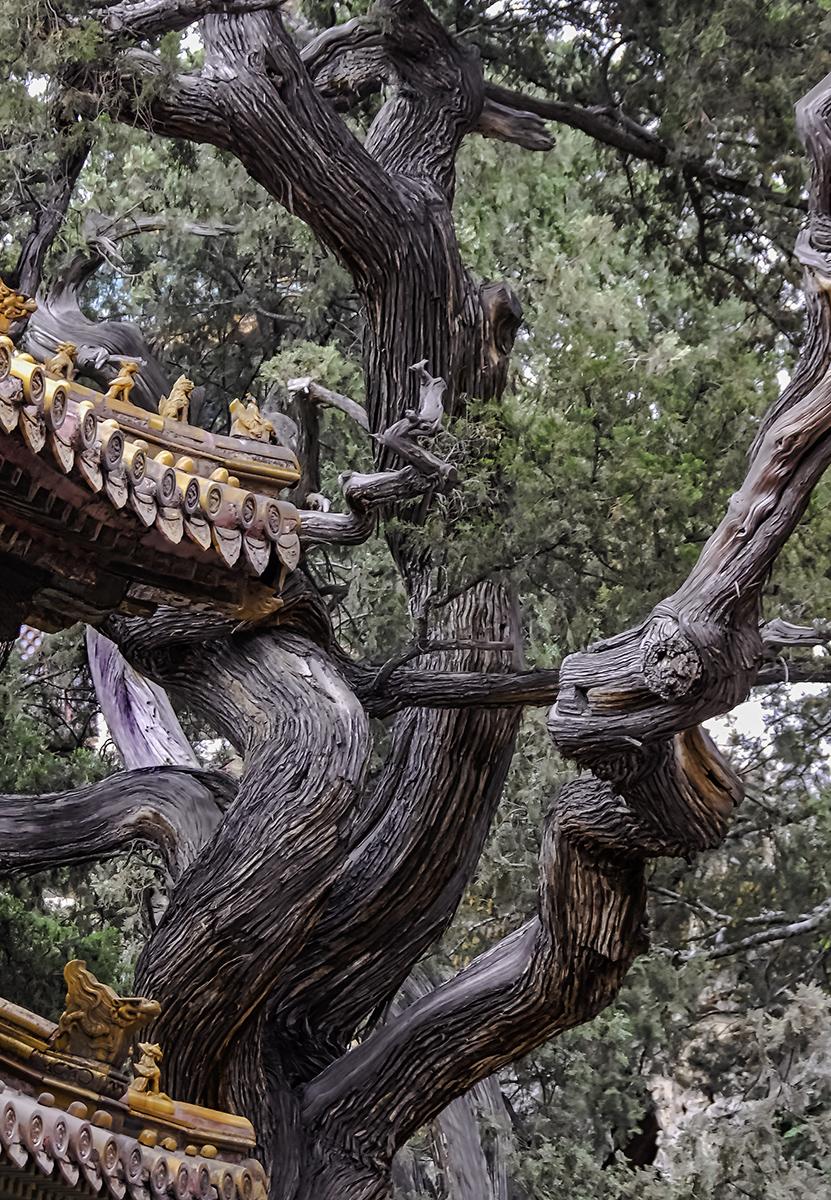 Forbidden City Garden