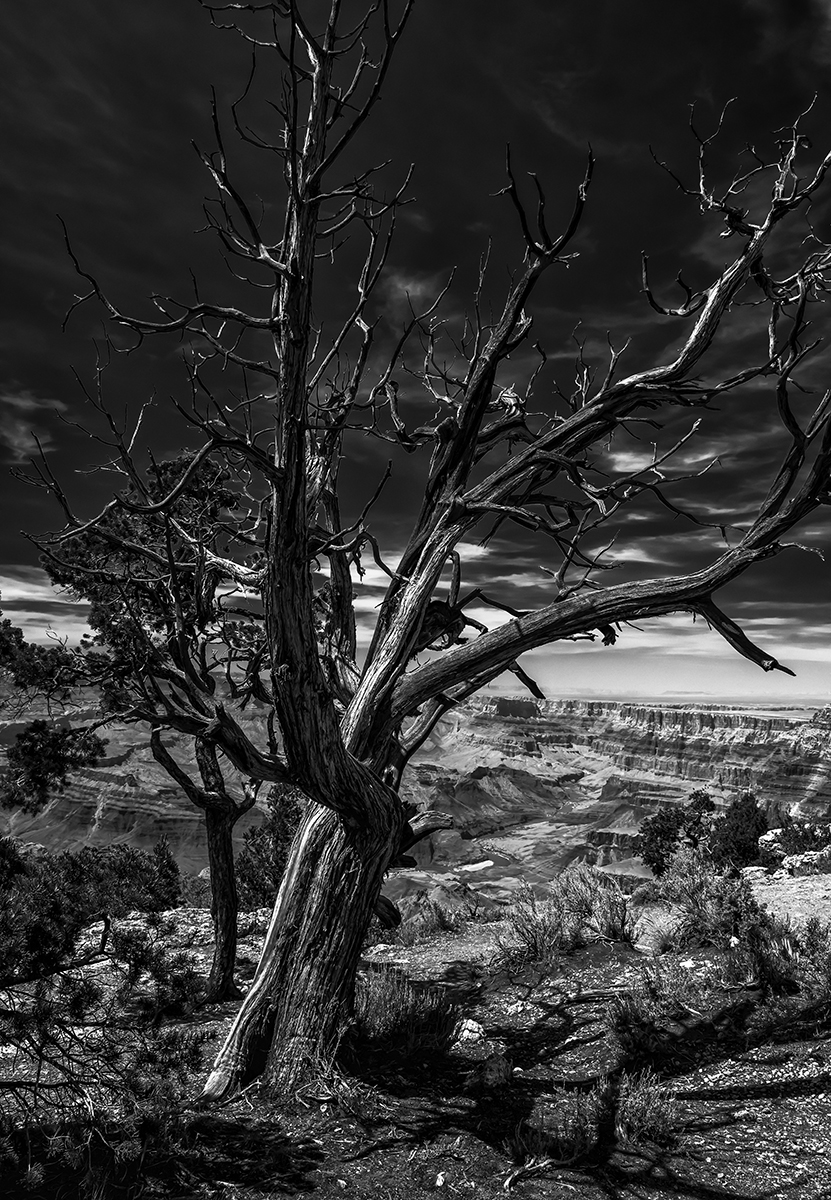 Grand Canyon in B&W