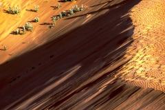 Coral Pink Sand Dunes State Paek